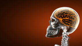 Realistic human brain radiography scan Royalty Free Stock Image