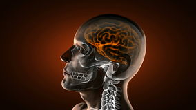 Realistic human brain radiography scan Stock Photo