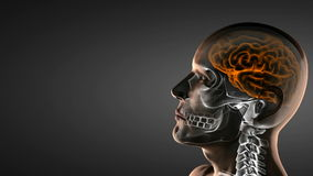 Realistic human brain radiography scan