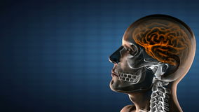Realistic human brain radiography scan Stock Photos