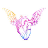 Realistic human heart with wings for St Valentine greeting cards, love symbol, template for invitation. Tattoo design. Royalty Free Stock Photo