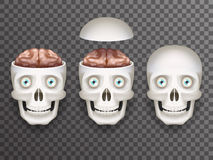 Realistic human skull with eyes and brain isolated icons set 3d realistic mockup transparent background design vector. Realistic human skull with eyes and brain Stock Photos