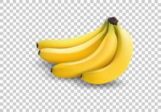 Realistic illustration bananas, 3d vector icons. Banana isolated on white background, banana icon. Vector illustration Royalty Free Stock Photos
