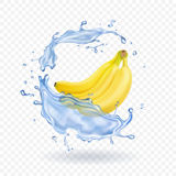 Realistic illustration of bananas isolated with water splash Stock Photography