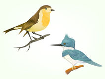 Realistic illustration birds isolated on white Royalty Free Stock Photo