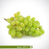 Realistic Illustration of Green Grapes Royalty Free Stock Photo