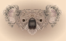 Realistic illustration of koala bear Stock Photography