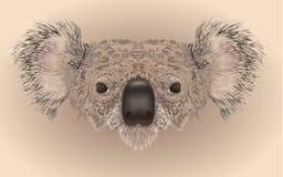 Realistic illustration of koala bear. Illustartion of koala bear face in realistic maner royalty free illustration