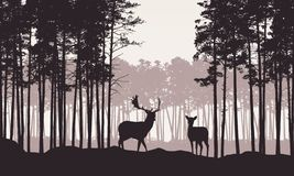 Realistic illustration of landscape with coniferous forest and morning retro sky. Deer and doe with antlers standing. Suitable as. Realistic illustration of vector illustration