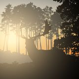 Realistic illustration of landscape with coniferous forest and morning sky with sunlight. Deer with antlers standing and looking. At sunrise or sunset. Suitable vector illustration