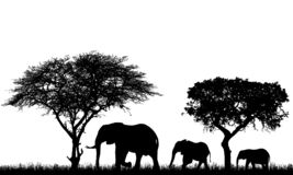 Realistic illustration of landscape with trees in african safari. A family of three elephants with a baby go in the grass, vector. Realistic illustration of vector illustration