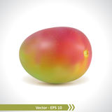 Realistic Illustration of a Mango Fruit Royalty Free Stock Images