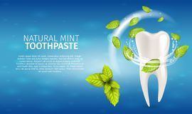 Realistic Illustration Natural Mint Toothpaste. 3d Banner Vector Illustration Snowwhite Clean Tooth with Mint Leaves After Applying a Whitening Toothpaste vector illustration