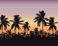 Realistic illustration of a palm forest. Purple orange sky with space for text, vector royalty free illustration