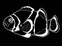 White sea fish illustration on a black background. Realistic illustration of a sea clown fish on a black background Royalty Free Stock Photo