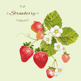 Realistic illustration of strawberry Stock Image