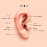 Realistic infographic ear icon Stock Images