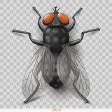 Realistic insect fly in vector insect fly. Realistic insect fly. 3D vector graphics. Transparent shadow royalty free illustration