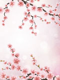 Realistic japan cherry branch. EPS 10 Royalty Free Stock Image