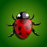 Realistic ladybug Royalty Free Stock Photo
