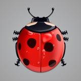 Realistic ladybug  on white Stock Photo