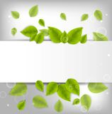 Realistic Leaves Background Stock Image
