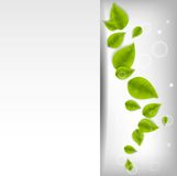 Realistic Leaves Background Royalty Free Stock Photography
