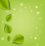 Realistic Leaves Background Stock Photo