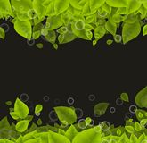 Realistic Leaves Background Stock Photos