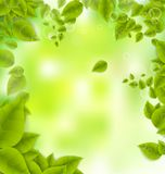 Realistic Leaves Background Stock Images