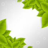 Realistic Leaves Background Royalty Free Stock Image