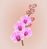 Realistic light purple vintage elegant orchid on a light background Royalty Free Stock Images