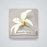 Realistic lily flower icon. Vector illustration Royalty Free Stock Photography