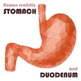 Realistic low poly human stomach and duodenum. Healthy digestive. System. Abstract medical concept. Vector Royalty Free Stock Images