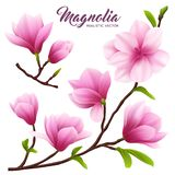 Realistic Magnolia Flower Icon Set stock illustration