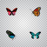 Realistic Milkweed, Callicore Cynosura, Hairstreak And Other Vector Elements. Set Of Butterfly Realistic Symbols Also royalty free illustration