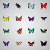 Realistic Milkweed, Morpho Hecuba, Polyommatus Icarus And Other Vector Elements. Set Of Moth Realistic Symbols Also vector illustration
