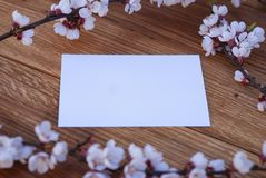 Realistic Mock up Postal Card with Blossom, on wooden background. Realistic Mock up Postal Card with Blossom, on wooden background royalty free stock photo