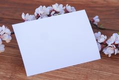 Realistic Mock up Postal Card with Blossom, on wooden background. Realistic Mock up Postal Card with Blossom, on wooden background royalty free stock photos