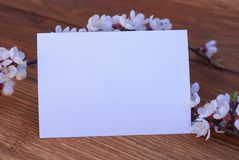 Realistic Mock up Postal Card with Blossom, on wooden background. Realistic Mock up Postal Card with Blossom, on wooden background stock image