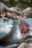 Realistic model of dinosaur Deinonychus Royalty Free Stock Image