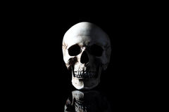 Realistic model of a human skull with teeth Royalty Free Stock Image