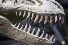 Realistic model of Tyrannosaurus Rex dinosaur Stock Image