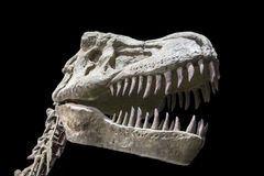 Realistic model of Tyrannosaurus Rex dinosaur Royalty Free Stock Images