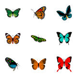 Realistic Monarch, Copper, Danaus Plexippus And Other Vector Elements. Set Of Beauty Realistic Symbols  Royalty Free Stock Photos