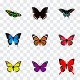 Realistic Morpho Hecuba, Monarch, Common Blue And Other Vector Elements. Set Of Butterfly Realistic Symbols Also. Realistic Morpho Hecuba, Monarch, Common Blue royalty free illustration