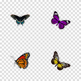 Realistic Morpho Hecuba, Summer Insect, Butterfly And Other Vector Elements. Set Of Moth Realistic Symbols Also Includes royalty free illustration