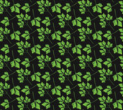 Realistic natural seamless pattern with green herb. Parsley branch and  leaves on black background. Flora style. Vector illustrati Stock Photo