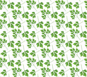 Realistic natural seamless pattern with green herb. Parsley branch and  leaves on white background. Flora style. Vector illustrati Stock Photos