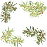 Realistic needles, spruce branches Christmas tree, Stock Image